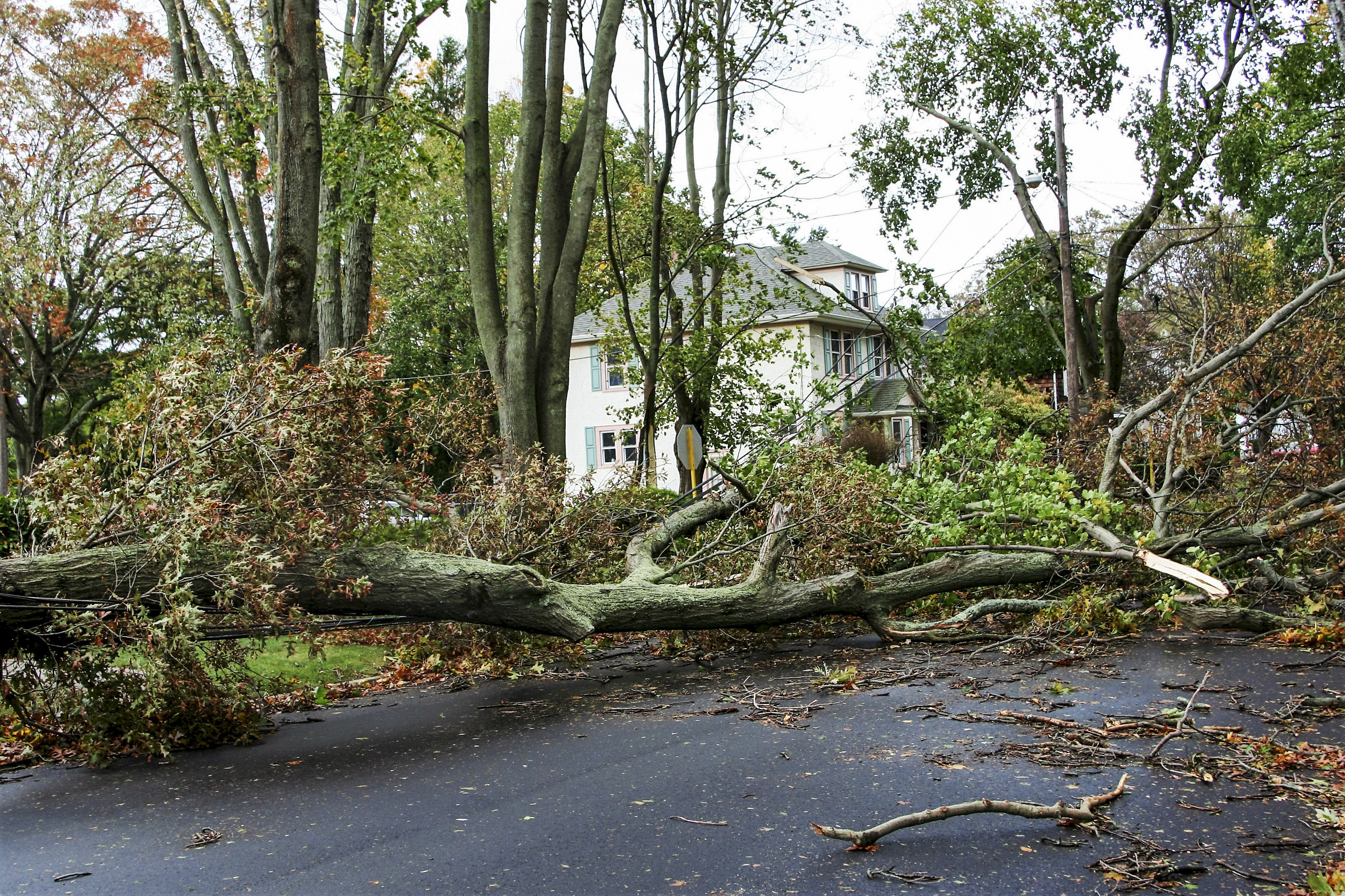 Protect your Home and Landscape from Damaging Storms